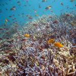 スキューバダイビング海外のおすすめスポット‼世界の海に潜りに行こう!
