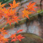 秋に美味しい食べ物選び!食欲の秋にぜひ楽しみたい食材